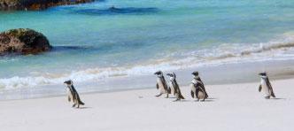 333travel   Rondreis: Kaapstad, Olifanten en Wijnregio