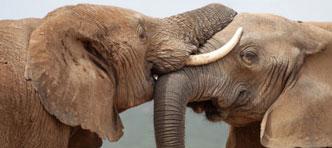 333travel | Kaapstad, Olifanten in Addo en Wijnregio