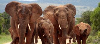 De Jong Intra Vakanties | Nationale parken van Zuid-Afrika