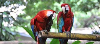 Djoser   Rondreis Brazilië en boottocht over de Amazone