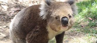 Djoser   Rondreis Australië 21 dagen, van Sydney naar Brisbane