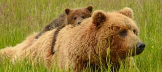 FOX, Verre Reizen van ANWB | Privé rondreis met huurauto Yukon & Alaska