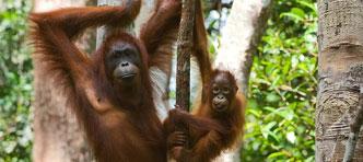 FOX, Verre Reizen van ANWB | Privé rondreis Sumatra