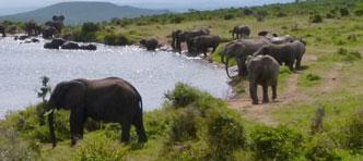 FOX, Verre Reizen van ANWB | Groepsrondreis Grand Tour Zuid-Afrika