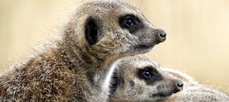 Mambo   Speuren naar Wildlife in Zuid-Afrika