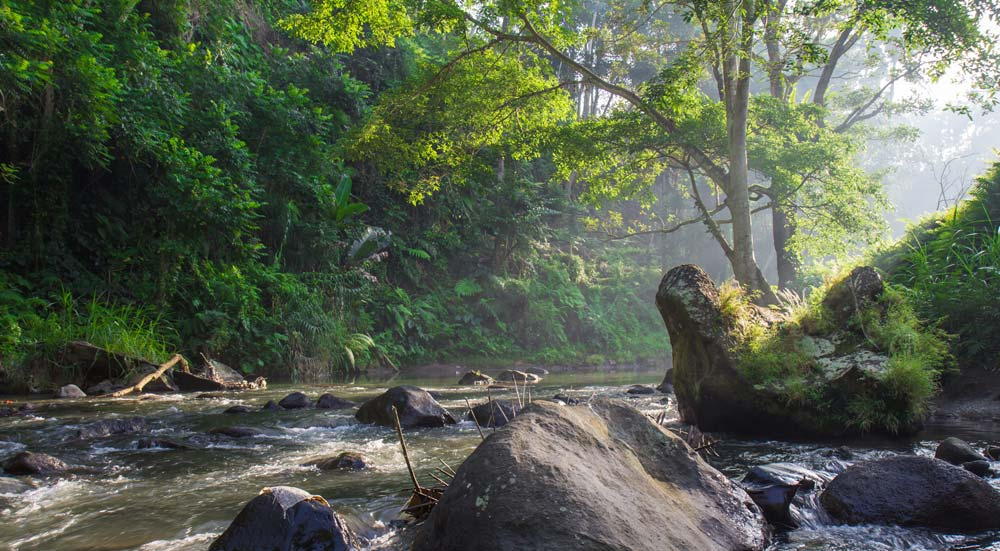 jungle van Bali, Indonesië