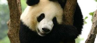 NRV | China Compleet, incl. Hong Kong. Ontmoet de reuzenpanda's in Chengdu