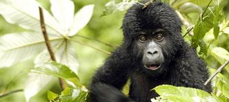 Sawadee | Rondreis Oeganda en Rwanda, incl gorillatrekking Bwindi National Park