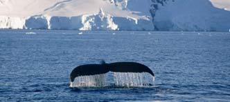 SNP | Antarctisch Schiereiland met Expeditieschip Ortelius
