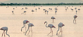 SNP Natuurreizen van ANWB | Flamingo's, wilde paarden en middeleeuwse dorpjes