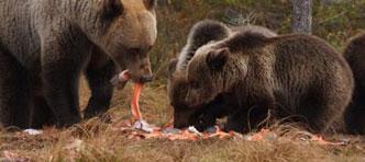 SNP Natuurreizen | Land van meren en beren, Fotoreis vanuit Hossa