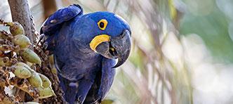 Tenzing Travel   Bonito en Zuid-Pantanal, naar de vallei van de bonte ara