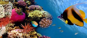 Van Verre | Rondreis Sulawesi met onderwaterwereld Togian