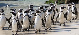 YourWay2Go | Ontdek de klassieke Tuinroute vanaf Kaapstad